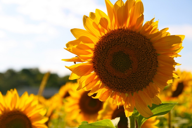 sunflower seeds productive office snacks